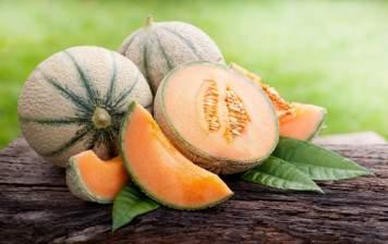 Organic charentais melon