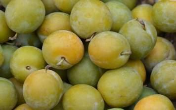 Greengage prunes